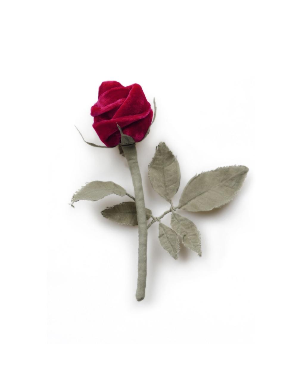 isee-produit-la fleur du veilleur de nuit